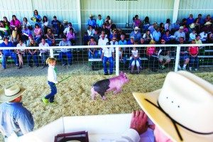 White Pine 4-H and FFA Livestock pig sale at the White Pine County Fairgrounds on Sunday. (Battle Born Media photo)
