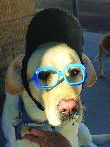 Melody Van Camp's dog Barnabee gets ready for the costume contest, (Garrett Estrada photo)