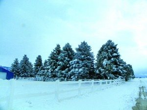 Teresa Stewart photo The total amount of new snow and how many days it snows at least 0.1 inches during the month of November was 4.7 days for Ely with 6.5 inches; 1.0 days for Eureka with 2.7 inches; 2.2 days for Great Basin National Park with 6.6 inches.