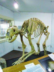 1-29 Museum-Bear1