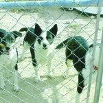 Free – Three Dogs