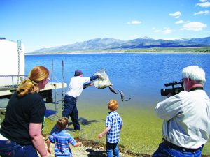 Ross Johnson photo  The Nevada Department of Wildlife restocks Comins Lake with its first rainbow trout in nine years on April 20.