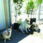 Donation of trees sought for dog shelter