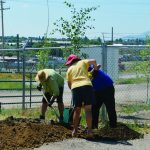 Shelter Gets Trees