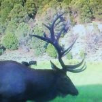 Local judge gives stiff sentence to elk poaching suspect