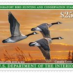 Latest Duck stamp  available at Ely Post Office