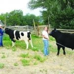 Moore sisters find time to raise steers for fair