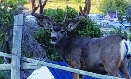 Commission discussing limits  to hunting near residents' homes