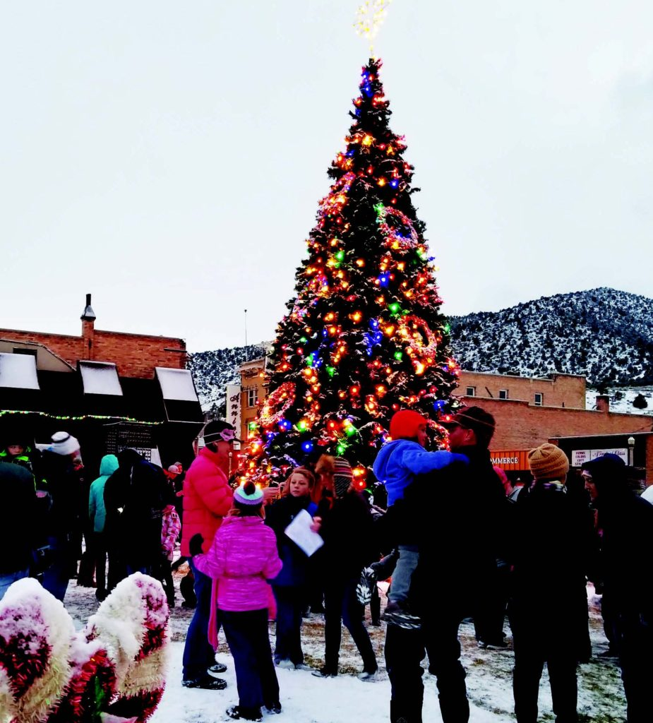 Oh Christmas Tree | The Ely Times