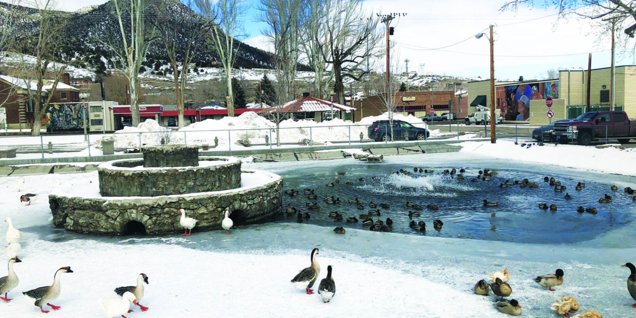Frozen temps not good for geese
