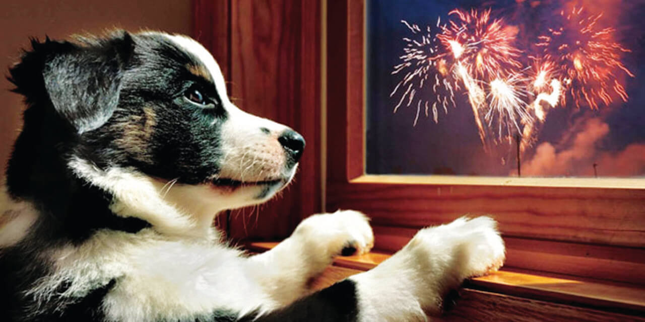 Keep your pets safe on the Fourth of July