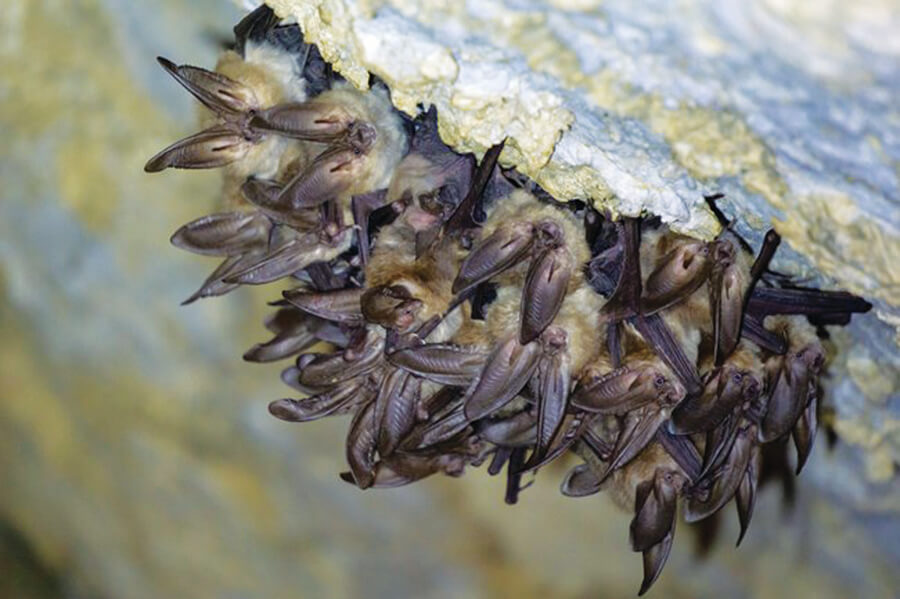 National Park Service to hold citizen science Bat BioBlitz