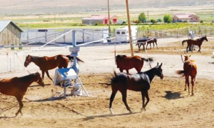 County Fair includes racing, rodeo