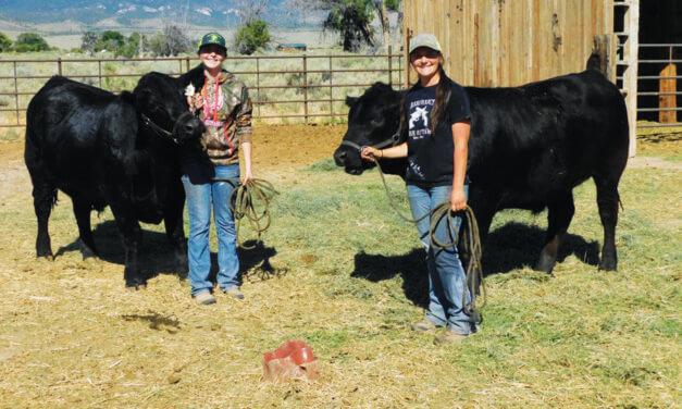Baker sisters raise steers as part of 4-H program