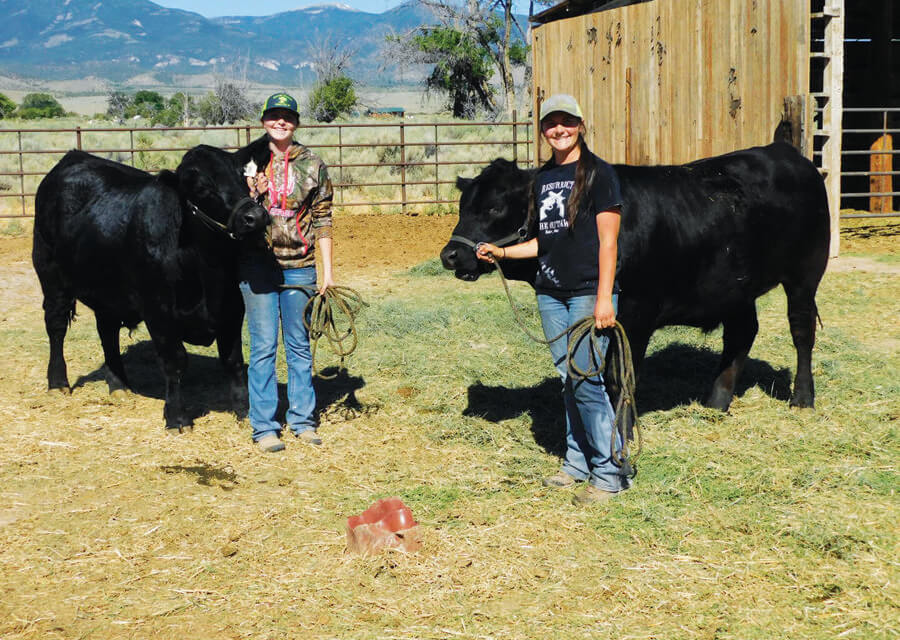 Baker sisters raise steers as part of 4-H program