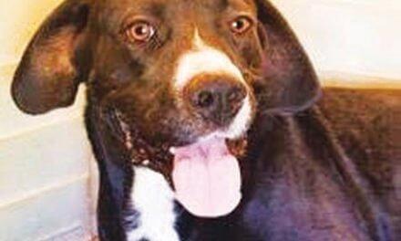 Free pet adoption event set at animal shelter