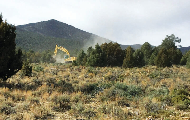 BLM thins trees to restore land health