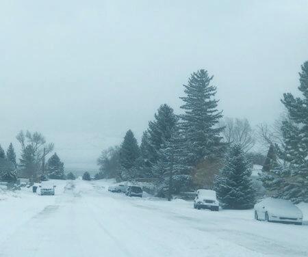 Snow slammed White Pine