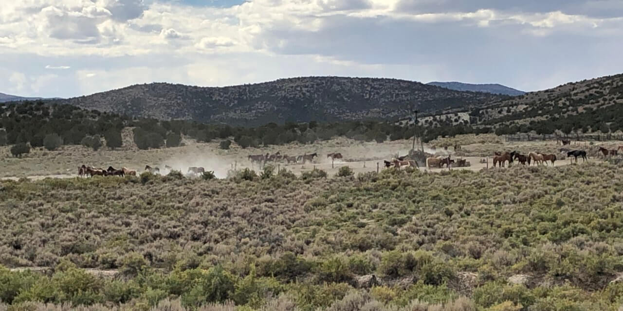 The Bureau of Land Management begins emergency wild horse gather