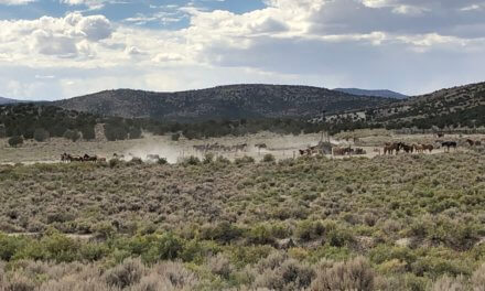 The Bureau of Land Management begins emergency wild horse gather